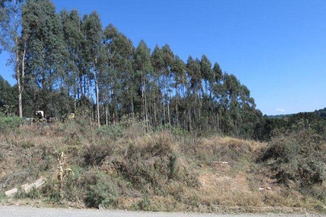 Terreno para Venda, Rio Negrinho / SC, bairro São Pedro - Foto 6