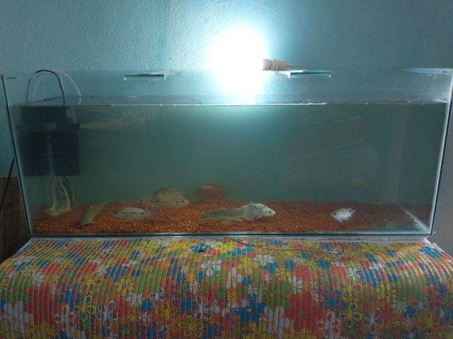 aquário 120L com filtro interno 600Lh