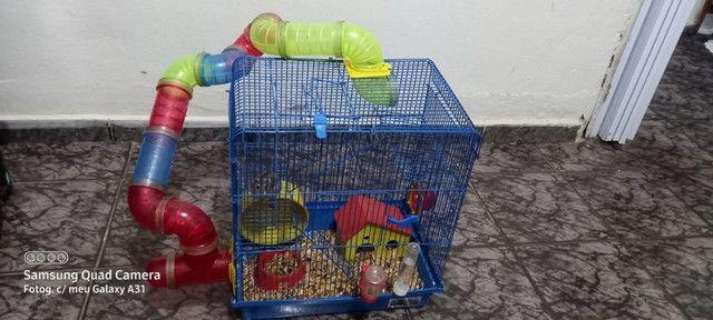 Gaiola com Hamsters