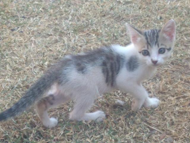 Gatos para Doação - Foto 2