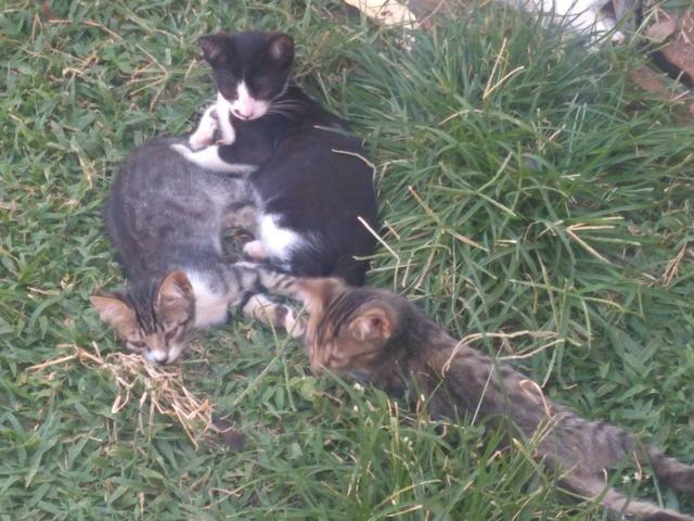 Gatos para Doação - Foto 6
