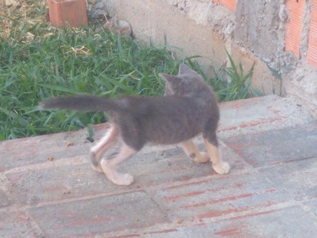 Gatos para Doação - Foto 4