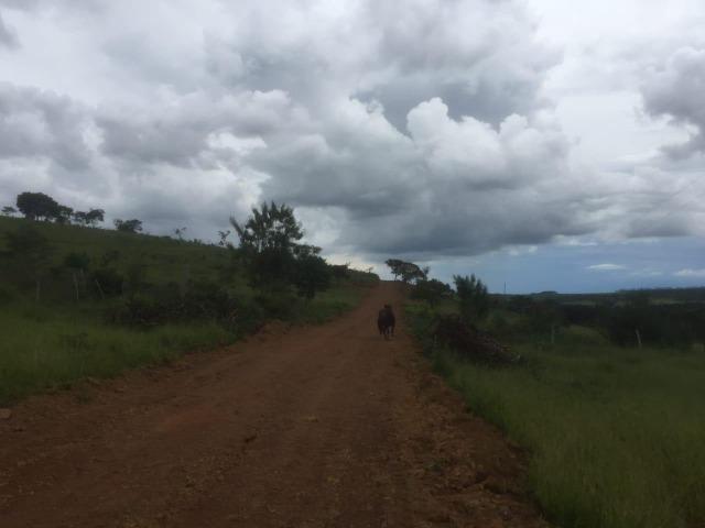 4 Alqueires c/ Rio p/ Lotear, Haras, Lazer, Gado. 40 km Anápolis-GO - Foto 7