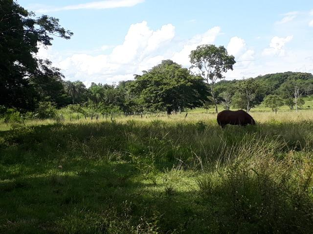 Chácara de porteira fechada na beira do rio Cuiabá com barco gado cavalo casa boa - Foto 9
