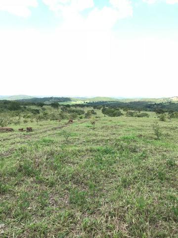 Oportunidade Extra Fazenda 100 Alqueires ou 484 Hectares Aragoiânia - Foto 2
