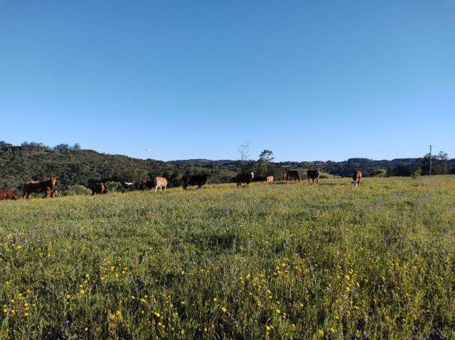 Fazenda na Cascata - 75 ha - Pelotas - RS - Foto 16