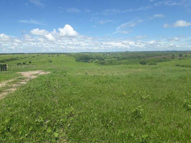 Fazenda com 190 hectares na região do vale de Monte  - Foto 5
