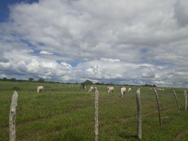 Fazenda com 190 hectares na região do vale de Monte  - Foto 6