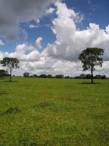 Fazenda a venda em Piracanjuba de 20 alqueires para Pecuária e lavoura - Foto 6
