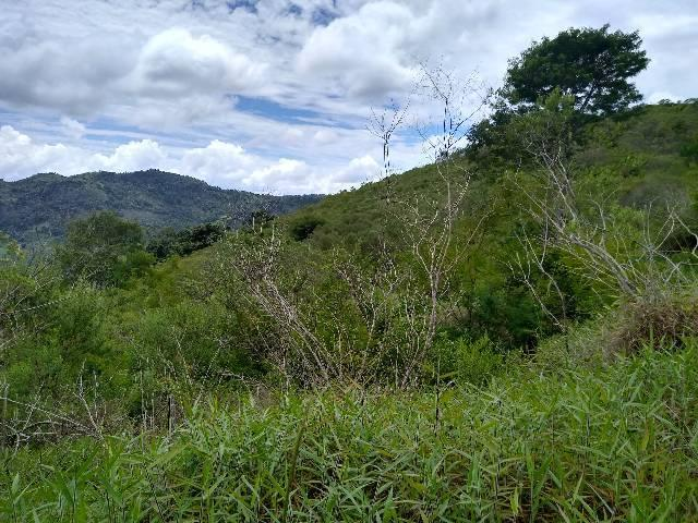 Sítio Santa Leopoldina meia légua 5 Alqueires - Foto 3