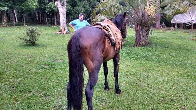 Bagual mangalarga Marchador  - Foto 5