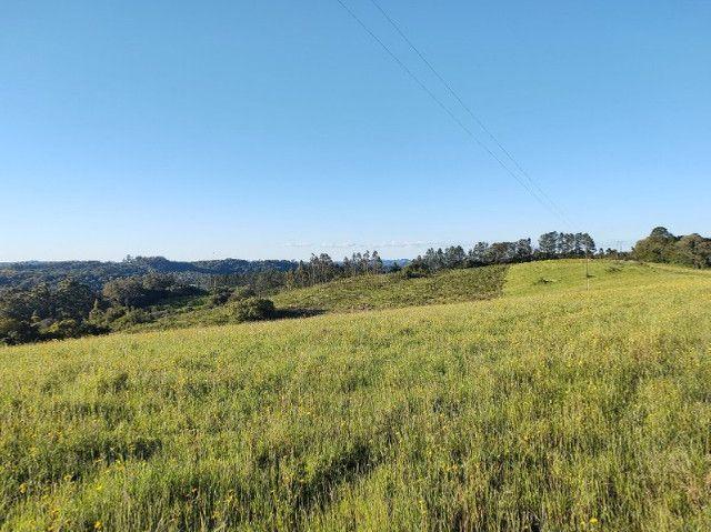 Fazenda na Cascata - 75 ha - Pelotas - RS - Foto 15