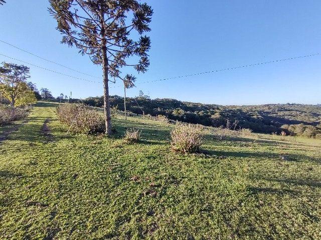 Fazenda na Cascata - 75 ha - Pelotas - RS - Foto 20
