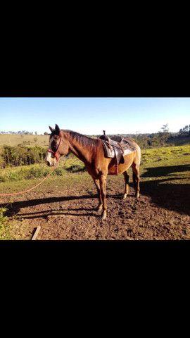 Cavalo de lida - Foto 2