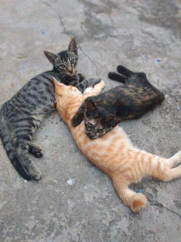 Gatinhos, adoção responsável. urgente