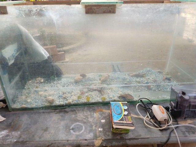 Vendo aquario 240 litros  - Foto 2
