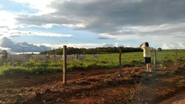 Fazenda beira do lago a melhor da região - Foto 8