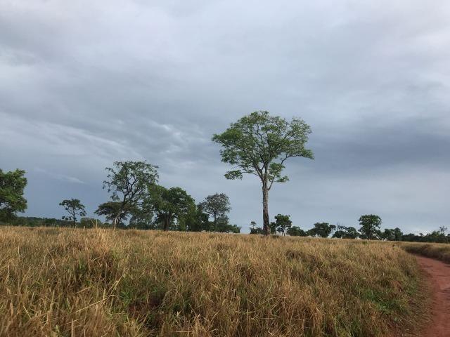 Fazenda plana e rica em água, 24 Alqueires (116.16 ha ) Bela Vista de Goias - Foto 19