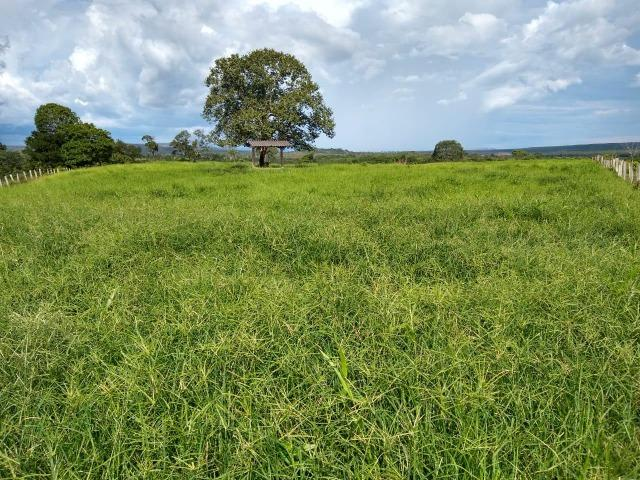 Fazenda de 216 alqueires 1.045,44 hectares- Miracema do Tocantins-TO - Foto 14