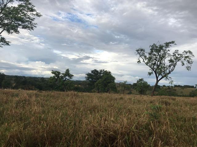 Fazenda plana e rica em água, 24 Alqueires (116.16 ha ) Bela Vista de Goias - Foto 9