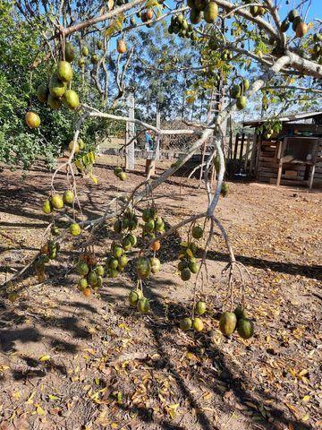 Cajamanga e Geleia Natural e Orgânico  - Foto 3