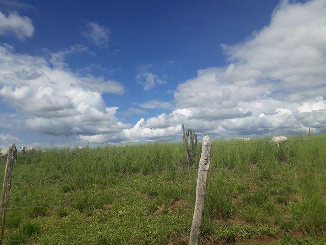 Fazenda com 190 hectares na região do vale de Monte  - Foto 10