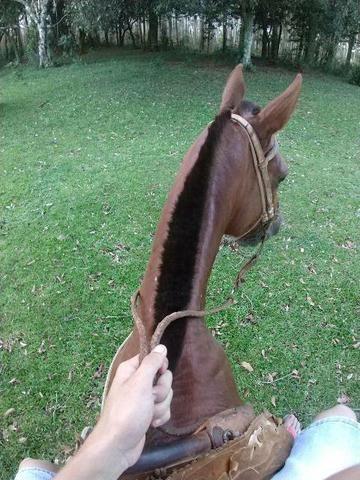 Cavalo inglês x quarto de milha