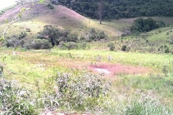 Vendo- Sítio no Sul de Minas com 26 hectares!! - Foto 11