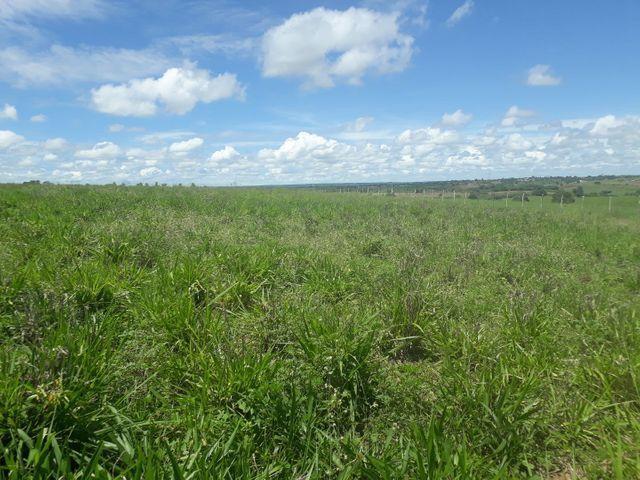 Fazenda com 190 hectares na região do vale de Monte  - Foto 19