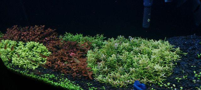 Aquario completo 50x27x36 vidro novo. - Foto 5