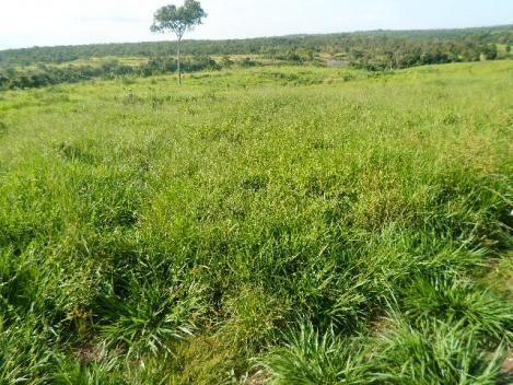 Fazenda 83 alqueires, 76 km de Paraiso