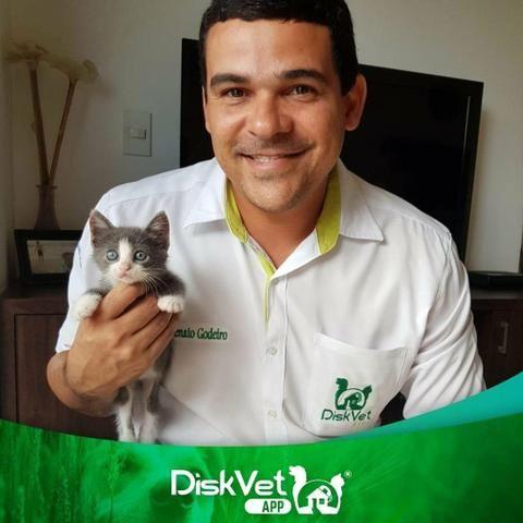 Veterinário em Domicílio - Foto 4