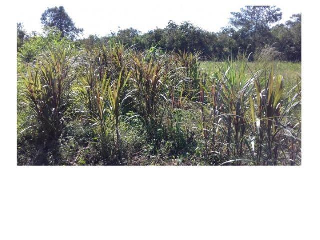 42 hectares, aceito camioneta, capão verde, terra preta,culturão, ocasião - Foto 5