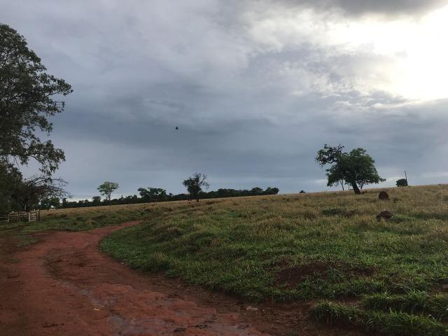 Fazenda plana e rica em água, 24 Alqueires (116.16 ha ) Bela Vista de Goias - Foto 20