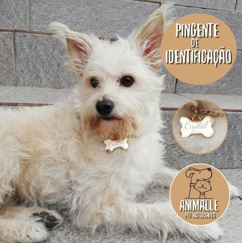 Placa de identificação Dourada de Identificação Cachorros e Gatos