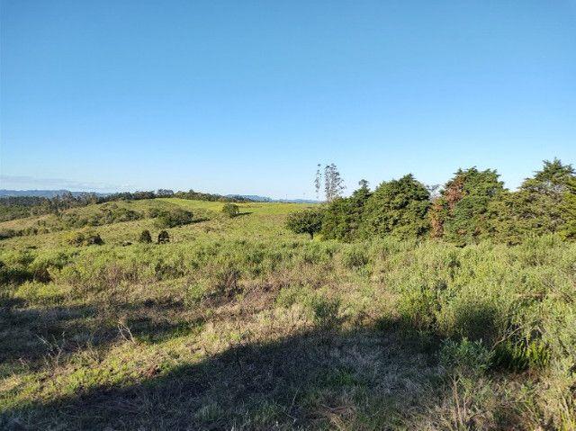Fazenda na Cascata - 75 ha - Pelotas - RS - Foto 7