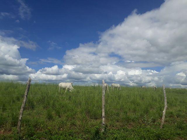 Fazenda com 190 hectares na região do vale de Monte  - Foto 8