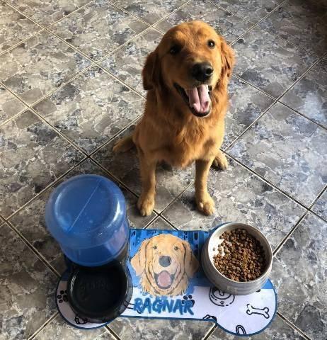 Tapetes personalizados para seu pet