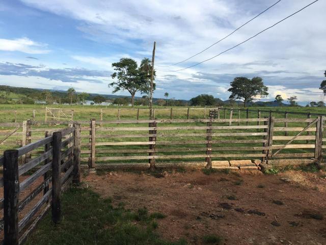 Fazenda 100 Alqueires, entre Professor Jamil e Piracanjuba