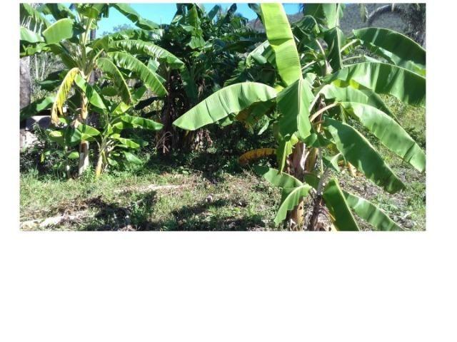 42 hectares, aceito camioneta, capão verde, terra preta,culturão, ocasião - Foto 3