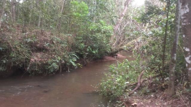 4 Alqueires c/ Rio p/ Lotear, Haras, Lazer, Gado. 40 km Anápolis-GO - Foto 6