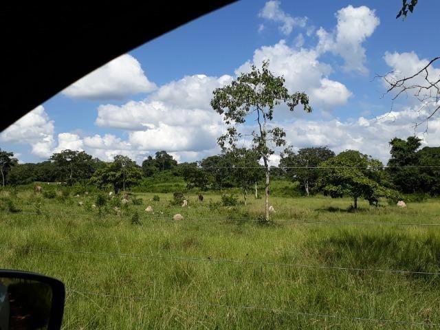 Chácara de porteira fechada na beira do rio Cuiabá com barco gado cavalo casa boa - Foto 12