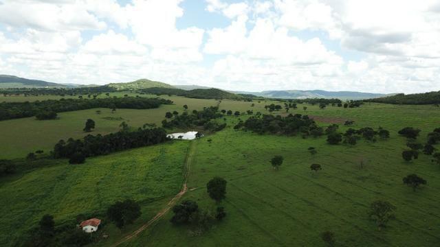 Oportunidade Extra Fazenda 100 Alqueires ou 484 Hectares Aragoiânia - Foto 7