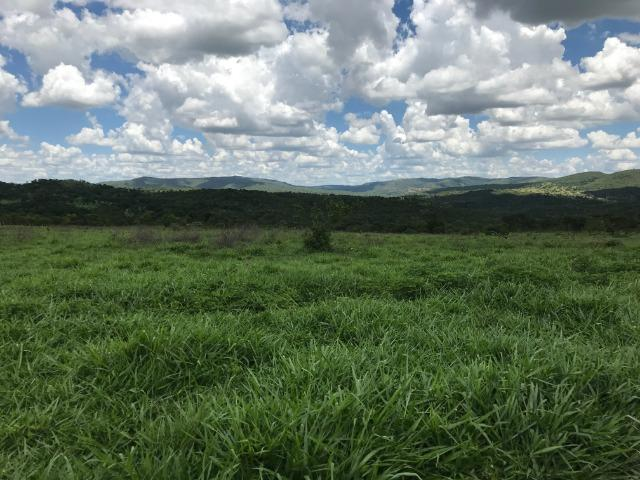 Oportunidade Extra Fazenda 100 Alqueires ou 484 Hectares Aragoiânia - Foto 6