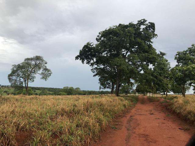 Fazenda plana e rica em água, 24 Alqueires (116.16 ha ) Bela Vista de Goias - Foto 13