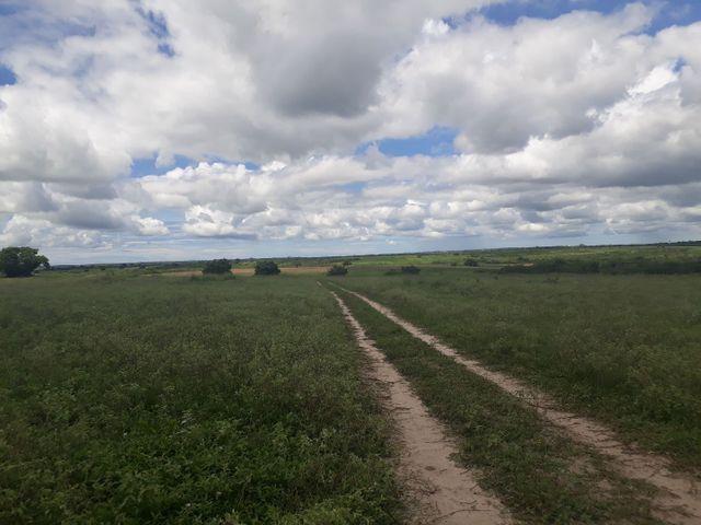 Fazenda com 190 hectares na região do vale de Monte  - Foto 20