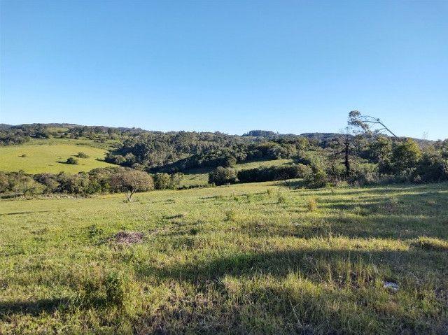 Fazenda na Cascata - 75 ha - Pelotas - RS - Foto 4