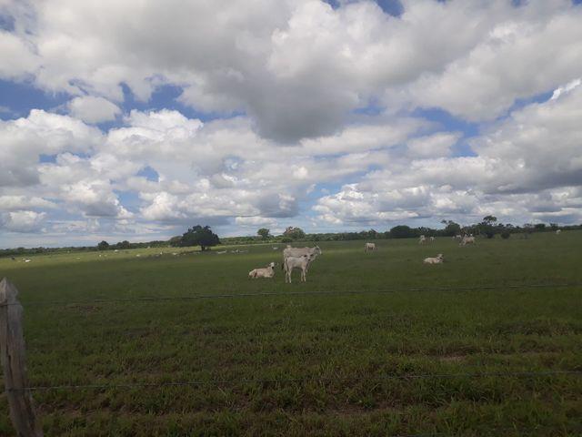 Fazenda com 190 hectares na região do vale de Monte  - Foto 2
