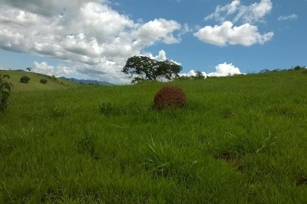 Vendo- Sítio no Sul de Minas com 26 hectares!! - Foto 6