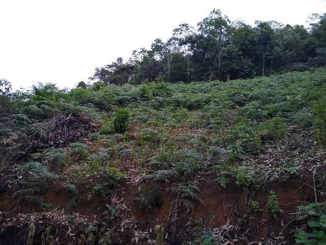 Chácaras Cariacica 15 mil metros - Foto 5